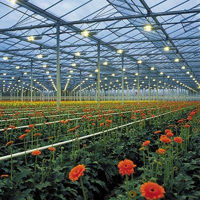 Iluminaci n horticultural y floral la importancia de la for Importancia de las plantas ornamentales
