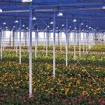 Iluminación horticultural y floral: la importancia de la luz en los invernaderos