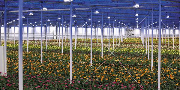 Iluminación horticultural y floral en invernaderos