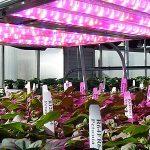 Tecnología LED de Osram Opto para iluminar la horticultura