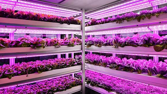 osram-opto-horticultura